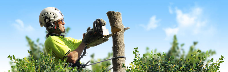 Looking for tree removal in Melbourne?